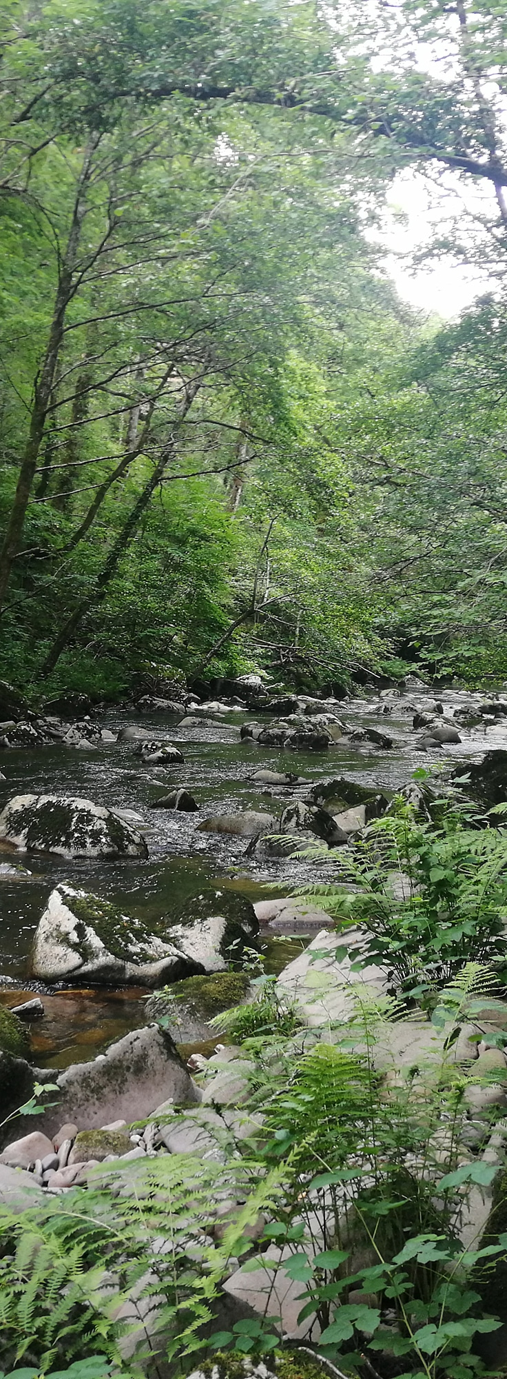 Parcours Saint-Hippolyte Trail d'Aqui est l'espace trail de la Communauté de Communes Comtal Lot Truyère. 21 parcours (Bessuéjouls, Bozouls, Campuac, Coubisou, Entraygues, Espalion, Espeyrac, Estaing, Gabriac, Golinhac, La Loubière, Lassouts, Le Cayrol, Le Fel, Le Nayrac, Montrozier, Rodelle, Saint-Côme-d'Olt, Saint-Hippolyte, Sébrazac, Villecomtal) et 2 parcours demi-kilomètre vertical permettent de découvrir plus de 500 kilomètres de chemins et monotraces.