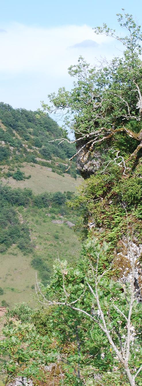 Parcours Rodelle Trail d'Aqui est l'espace trail de la Communauté de Communes Comtal Lot Truyère. 21 parcours (Bessuéjouls, Bozouls, Campuac, Coubisou, Entraygues, Espalion, Espeyrac, Estaing, Gabriac, Golinhac, La Loubière, Lassouts, Le Cayrol, Le Fel, Le Nayrac, Montrozier, Rodelle, Saint-Côme-d'Olt, Saint-Hippolyte, Sébrazac, Villecomtal) et 2 parcours demi-kilomètre vertical permettent de découvrir plus de 500 kilomètres de chemins et monotraces.